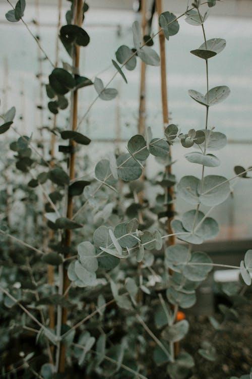 Photos gratuites de arbre, branche, cactus