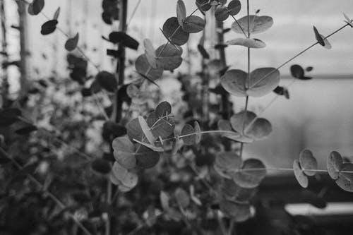 Grayscale Photo of Plant