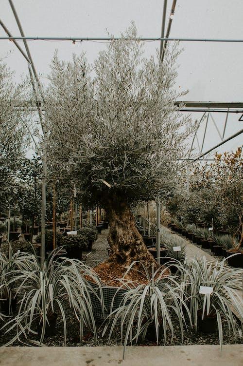 Leafless Tree Near White Metal Fence