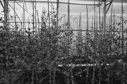 Grayscale Photo of Plants and Trees