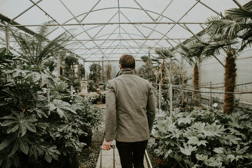 Woman in Gray Coat Standing in Front of Green Plants