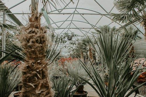 Kostenloses Stock Foto zu agave, aloe, baum