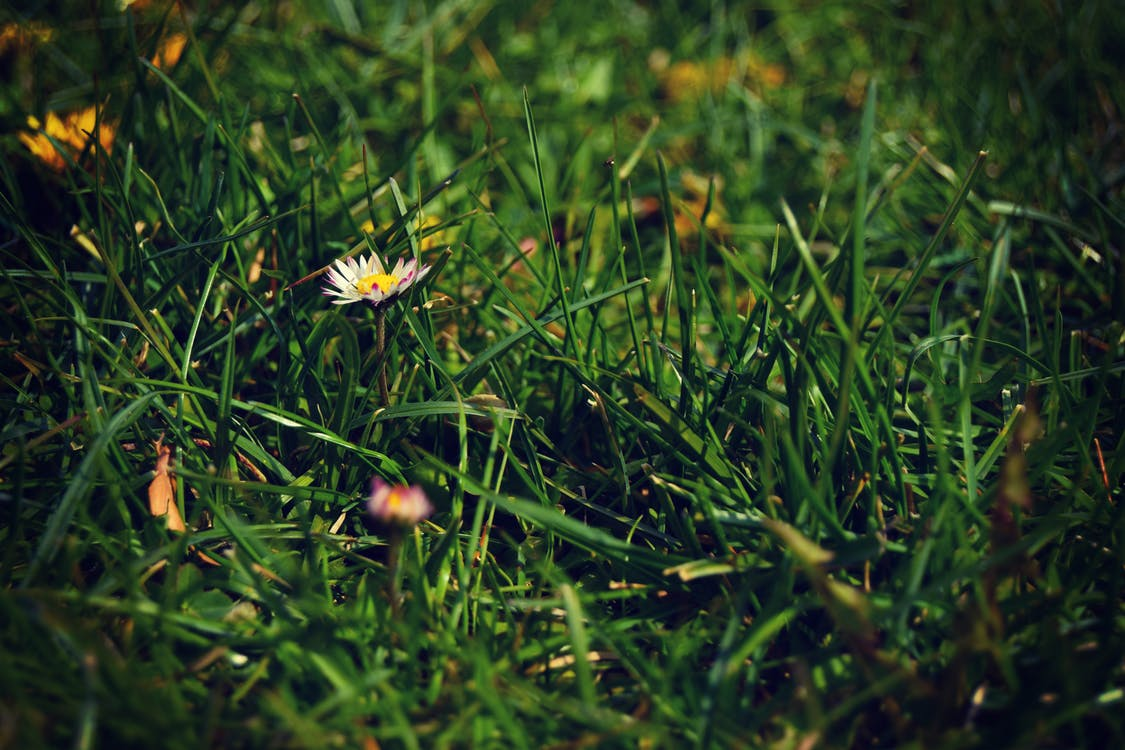 White Petaled Flower on Grass Field