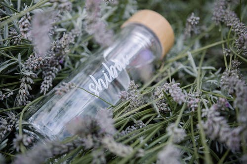 Clear Glass Water Bottle on Grass