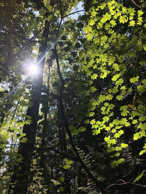 Free stock photo of forest, summer, sun glare