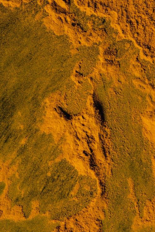 Golden Yellow Powder