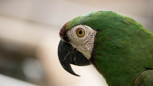 Green and White Parrot in Close Up Photography