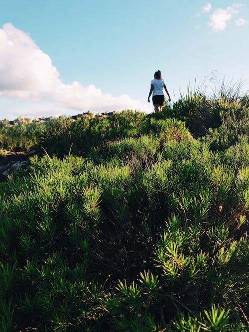 冒險, 原本, 增長, 夏天 的 免費圖庫相片