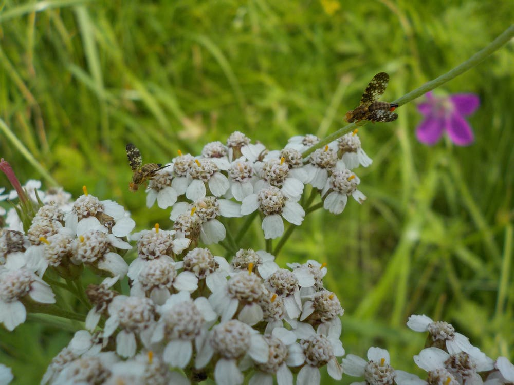 Free stock photo of flower, insect, summer