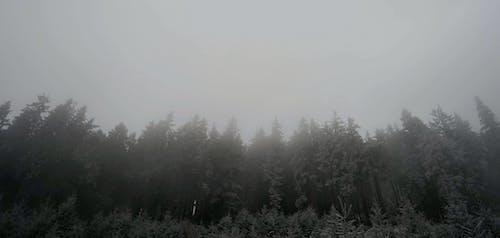 Trees Under A Gray Sky