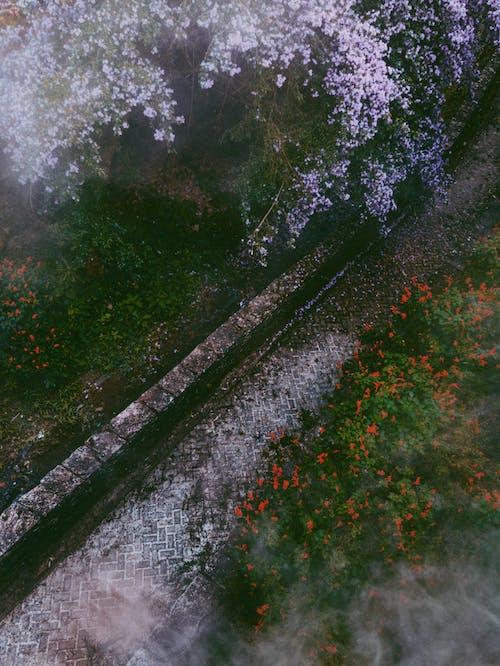 Imagine de stoc gratuită din abstract, apă, culoare, floare