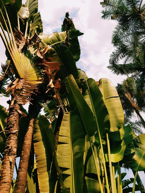 Imagine de stoc gratuită din arbore, banană, belo horizonte, călătorie