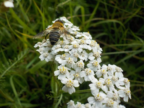Gratis lagerfoto af bi, blomst, hvid