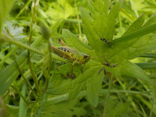 Gratis lagerfoto af græs, grøn, myre