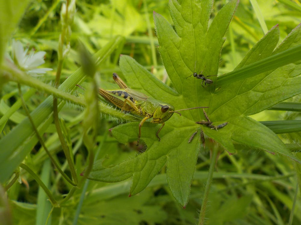 Free stock photo of ant, grass, green