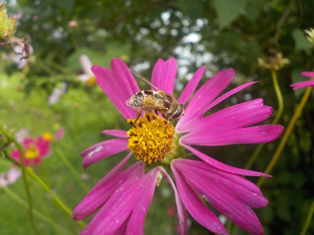 Пчела, цветок