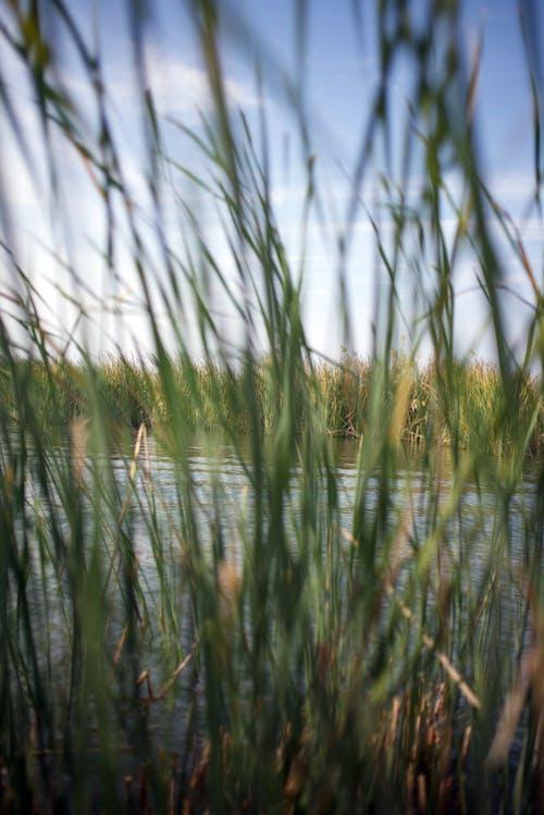 Free stock photo of beatiful landscape, iraq, Marshes