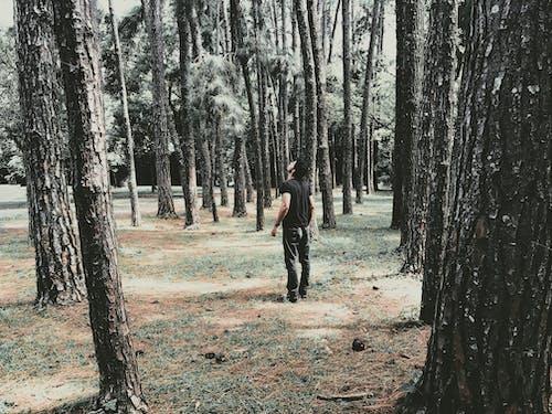 20 25歲的男人, 公園, 冒險, 原本 的 免費圖庫相片