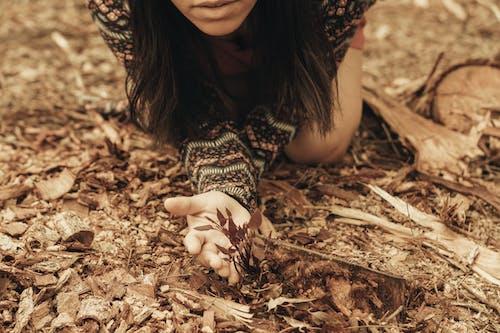 Imagine de stoc gratuită din adult, arbore, cădere, copac