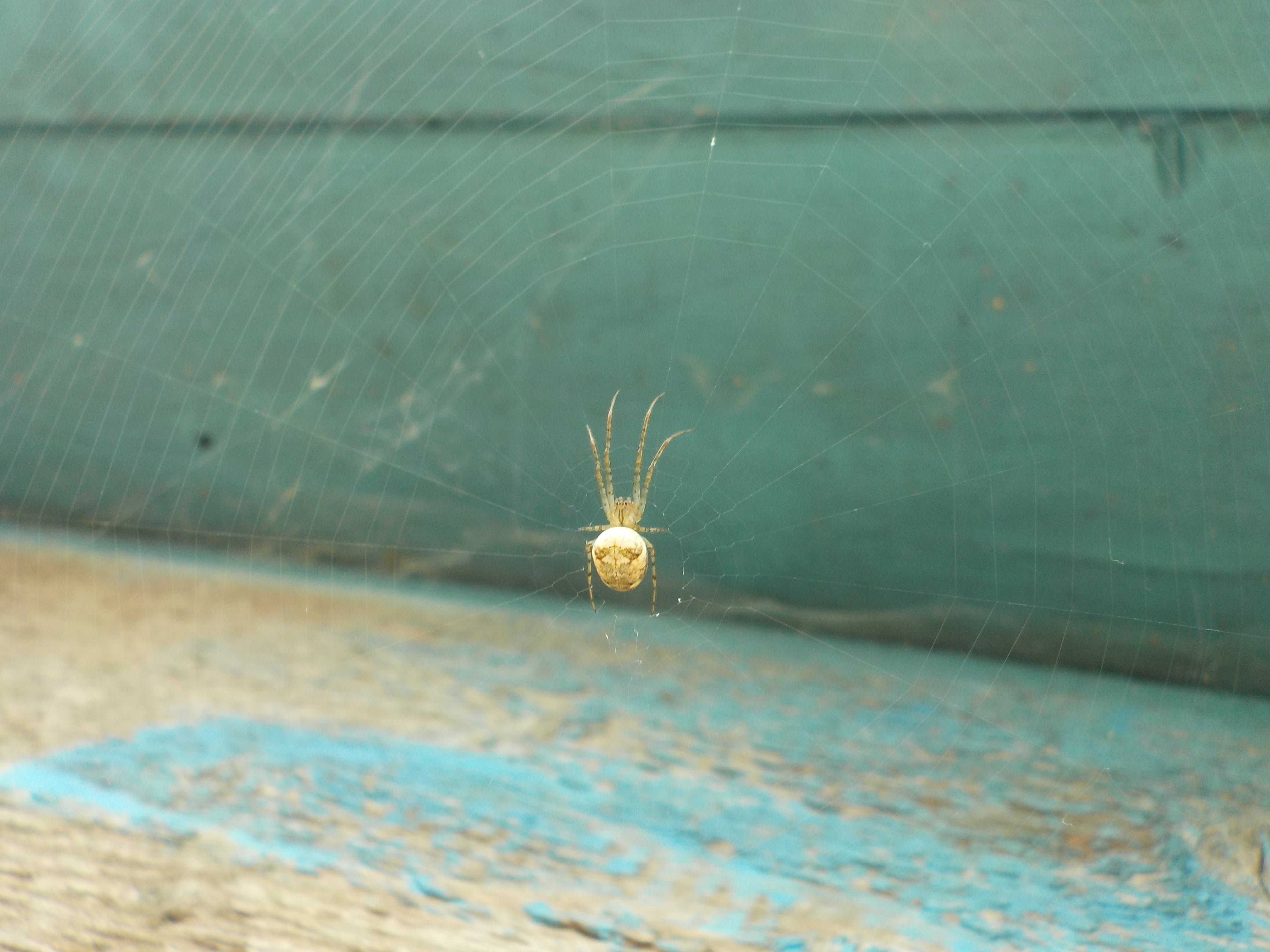 Free stock photo of spider, web