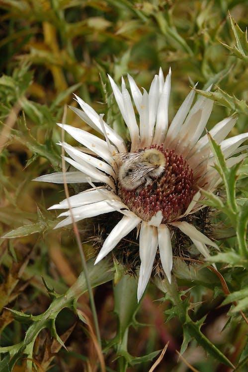 blomst, insekt