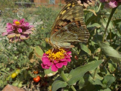 Gratis lagerfoto af blomst, sommerfugl