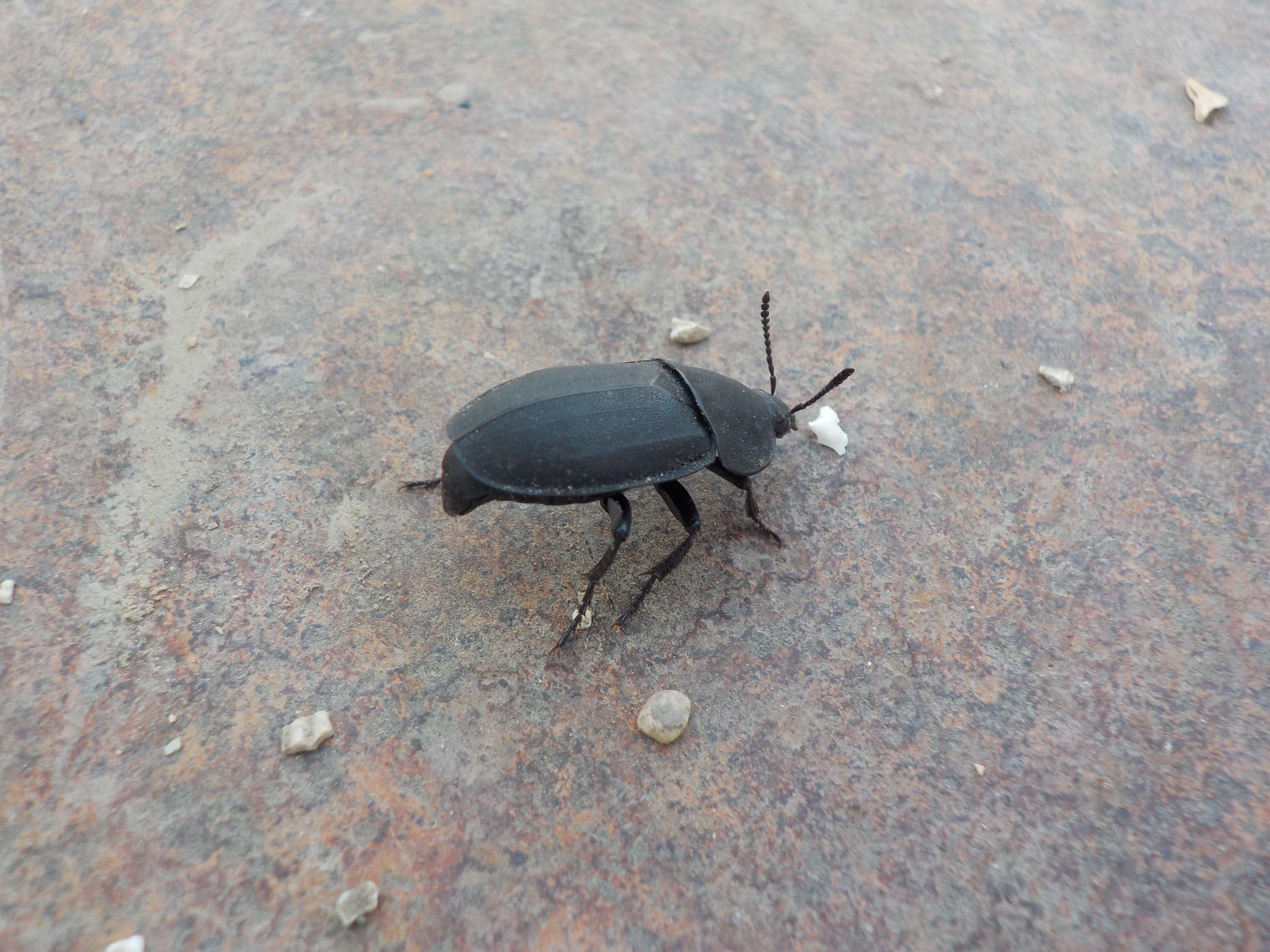 Free stock photo of beetles