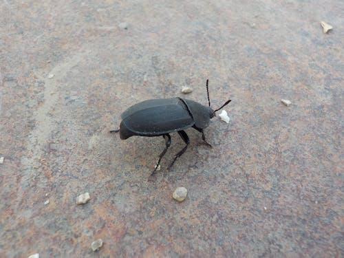 Ilmainen kuvapankkikuva tunnisteilla kovakuoriaiset