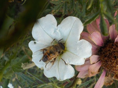 Gratis lagerfoto af bi, blomst