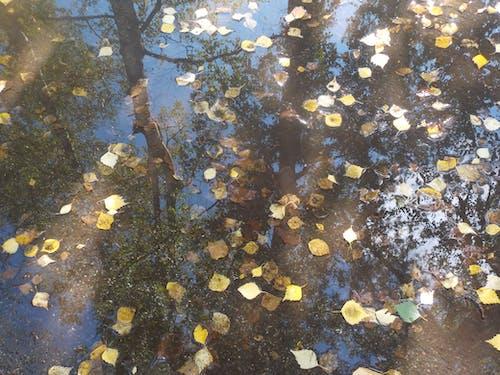 Ilmainen kuvapankkikuva tunnisteilla vesi