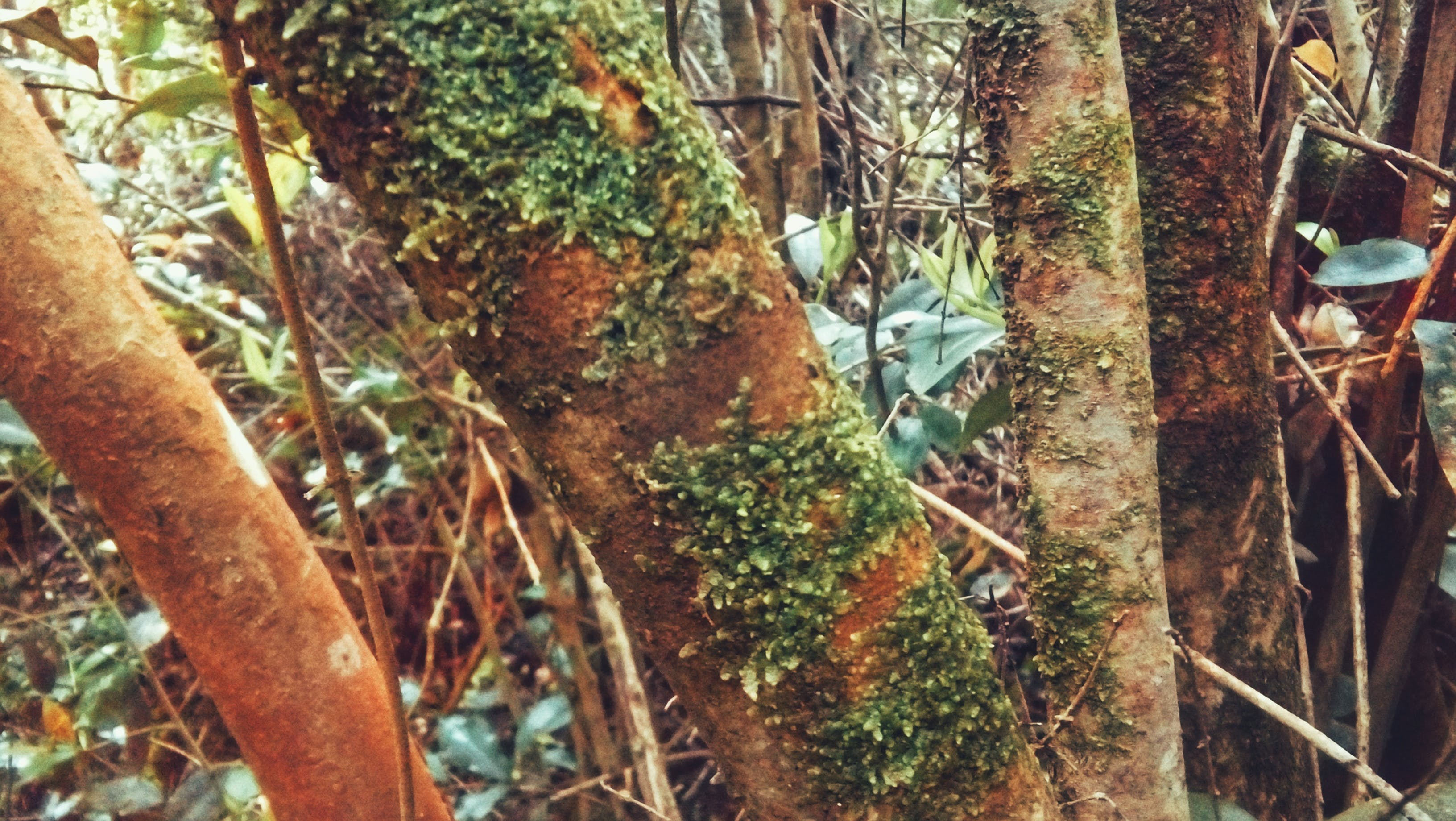 Free stock photo of HD wallpaper, Musge, nature, tree