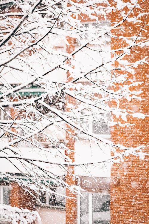 Photos gratuites de arbre, automne, bois, espace extérieur