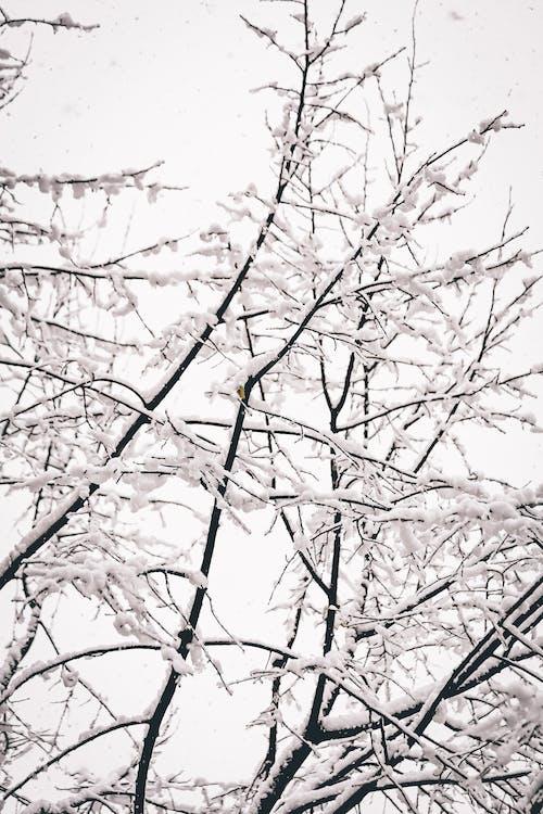 Photos gratuites de arbre, bois, branche, brindilles