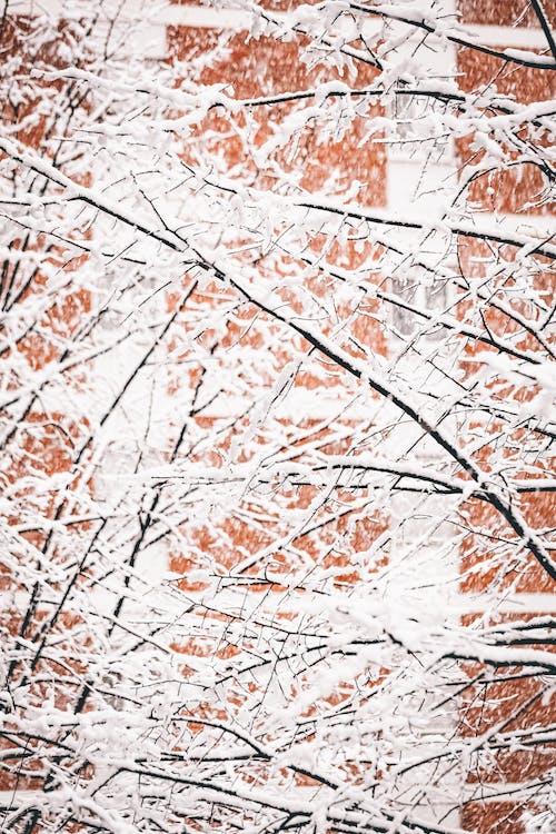 Photos gratuites de abstrait, arbre, automne, bois