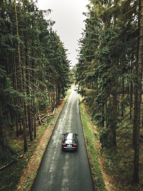 Xe đen Trên đường Giữa Rừng Cây