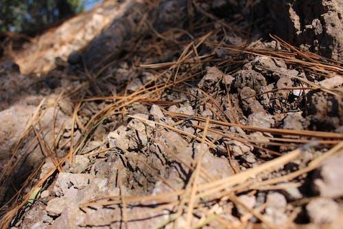 Foto profissional grátis de agulhas, agulhas de pinheiro, deserto, fotografia de pequenos seres