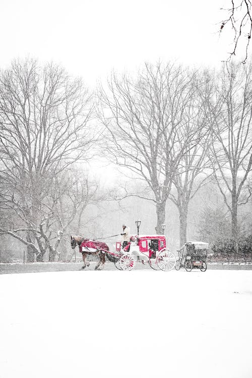 Horse carriage standing in snowy winter park on overcast day