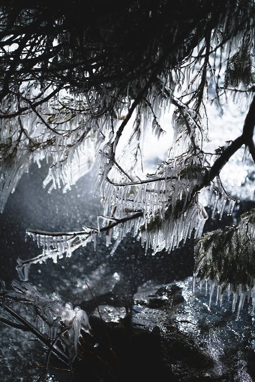 Tree covered with icicles in winter forest