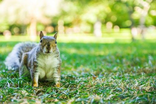 Ilmainen kuvapankkikuva tunnisteilla eläin, englanti, julkinen puisto, karvainen eläin