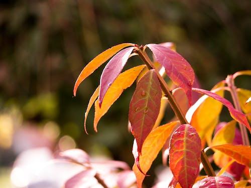Free stock photo of fall season