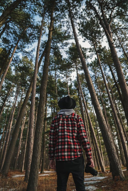 Back view of unrecognizable male photographer in stylish checkered shirt and hat standing in forest among tall pine trees with camera in hand and looking up