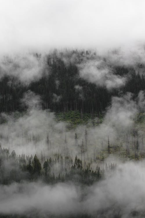 Breathtaking landscape of green forest with lush coniferous forest hidden under thick fog and clouds in mountainous valley