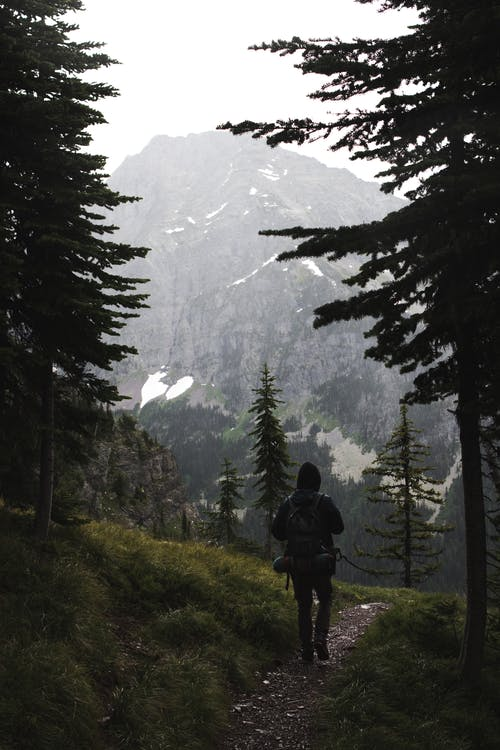 Back view of anonymous traveler in warm clothes and backpack walking on narrow alley between lush coniferous trees growing in forest in mountainous valley