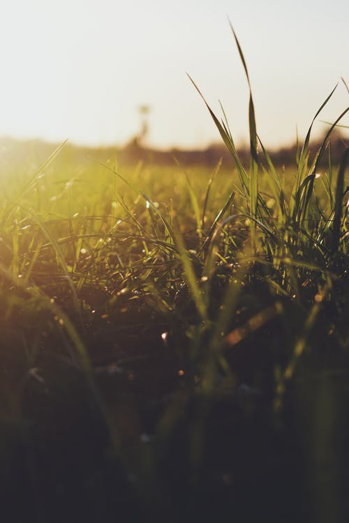 Free stock photo of grass, green grass, sunlight