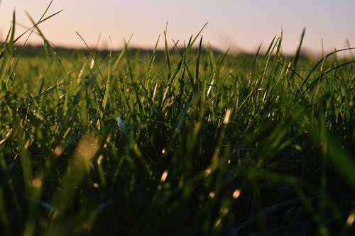 Free stock photo of green grass, sky