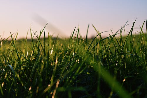Free stock photo of green grass, high grass, sky