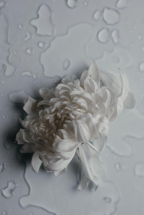 Základová fotografie zdarma na téma abstrakce, abstraktní, abstraktní umění