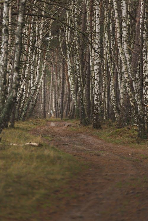 Foto stok gratis alam, alami, arah