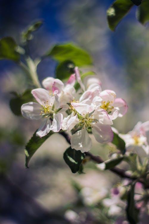 Foto d'estoc gratuïta de flor, flora, floral, florir