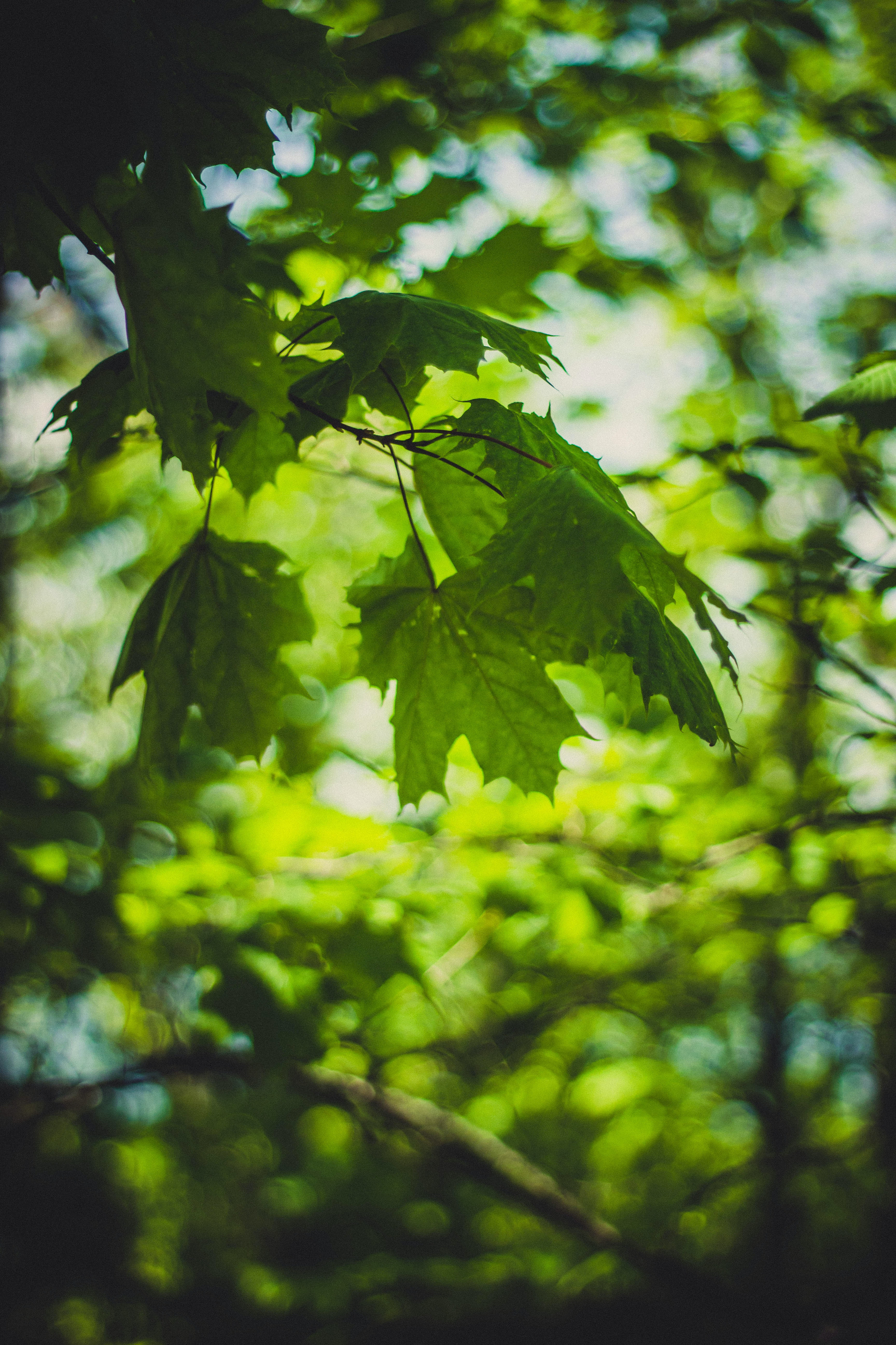 green and orange leaves focus photography  u00b7 free stock photo